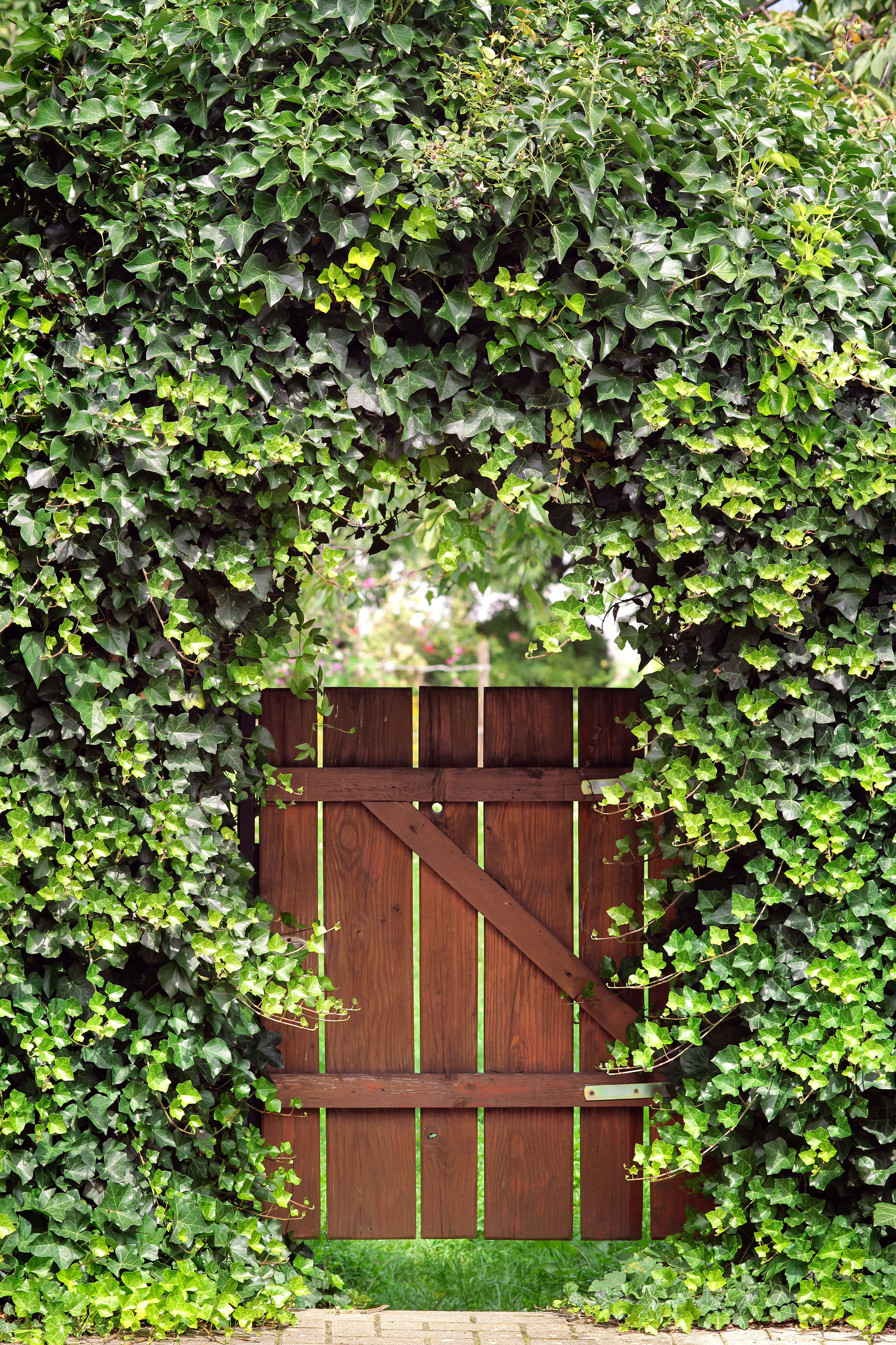 garden gates garden gate with ivy arch YHBPCYB