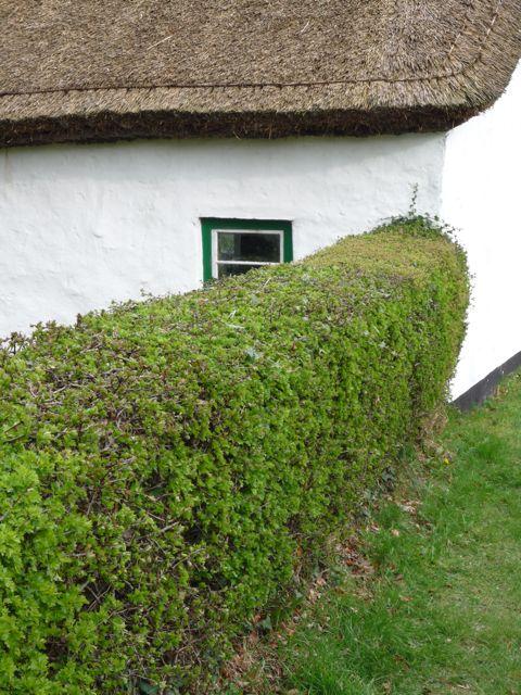 garden hedges a ... YUNTXNR