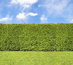 garden hedges KSXAIQV
