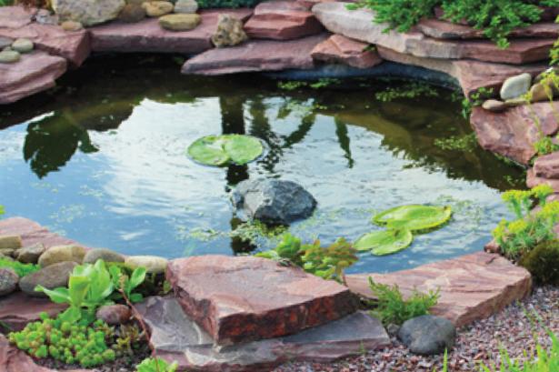 garden pond a lovely pond IANHKWK