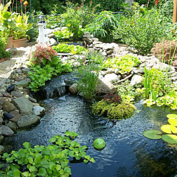 garden pond caring for garden ponds OUBPKEX
