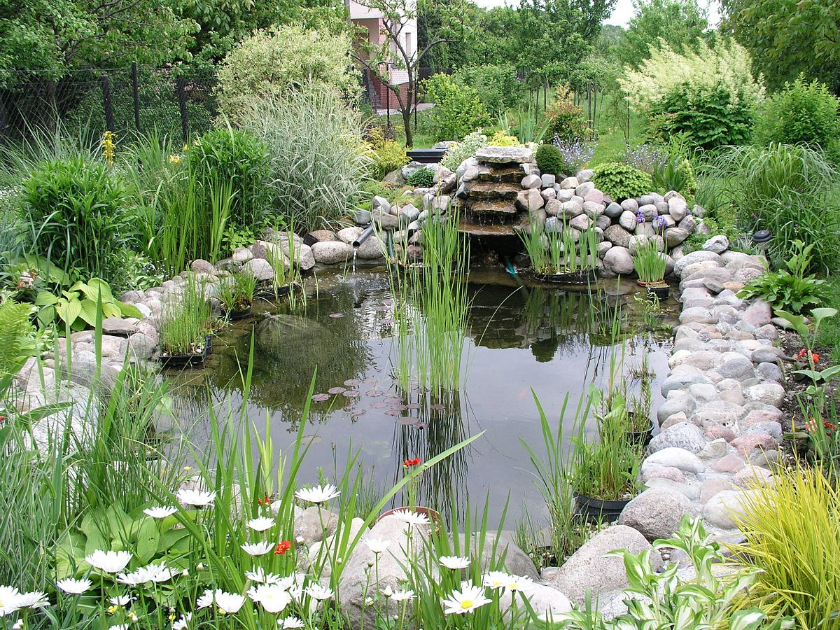 garden ponds water garden - wikipedia NQCOENT
