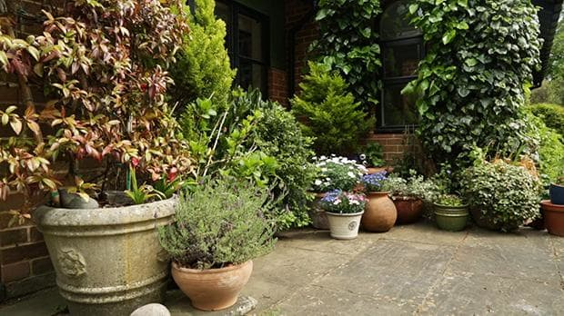 gardening inspiration: how to style a patio garden | the telegraph ZYGWKAW
