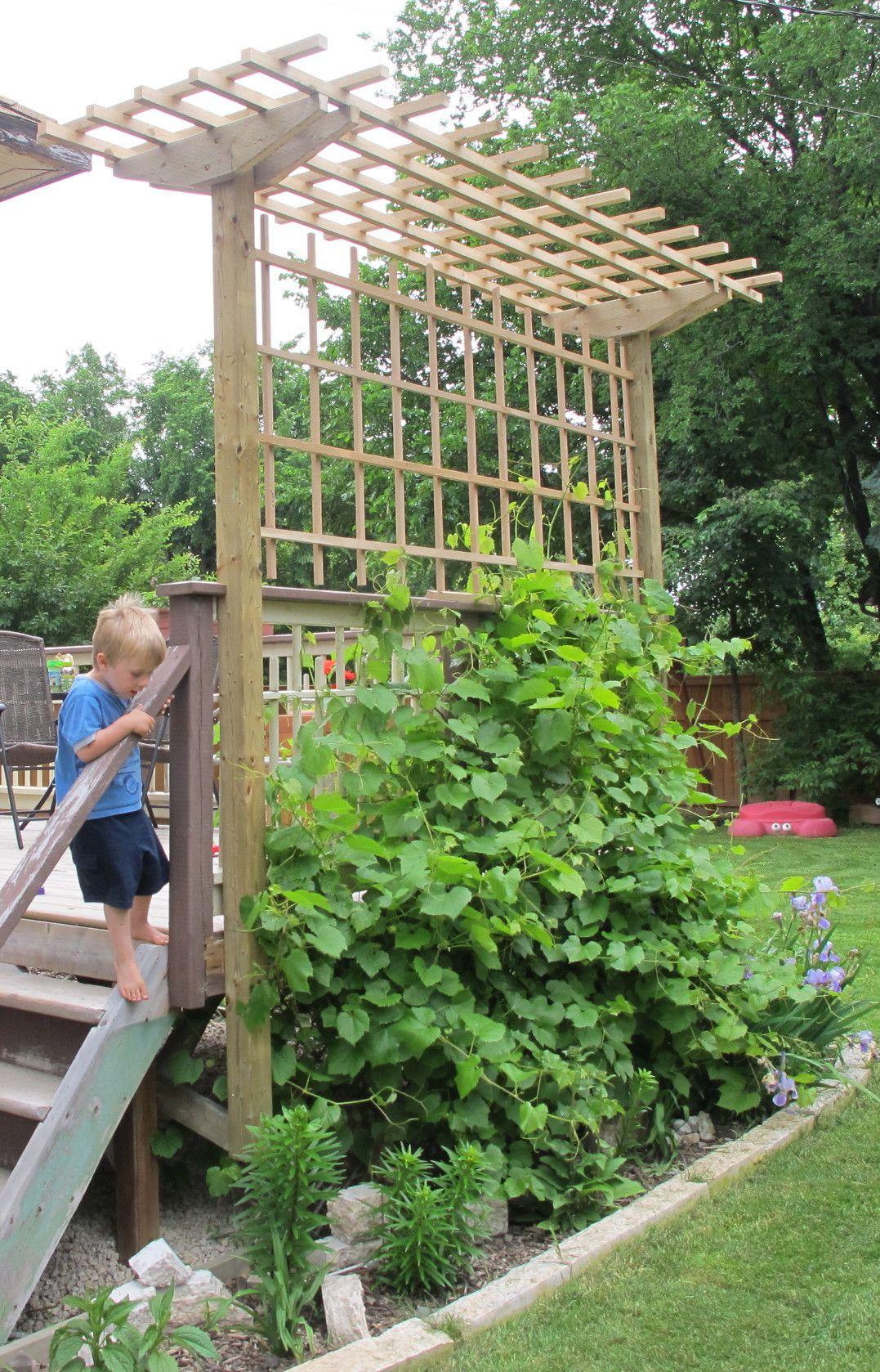 grape arbor construction | deckman custom decks BKHDKIY