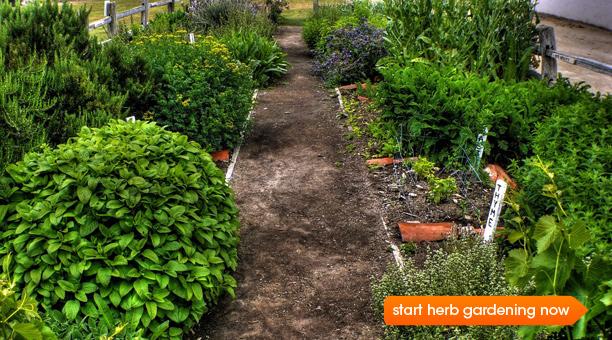 herb gardens d onu0027t underestimate the power of