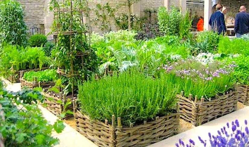 herb gardens having fresh herbs on hand BICLWVF