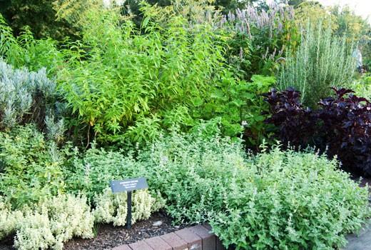 herb gardens herb gardening; how to grow herbs