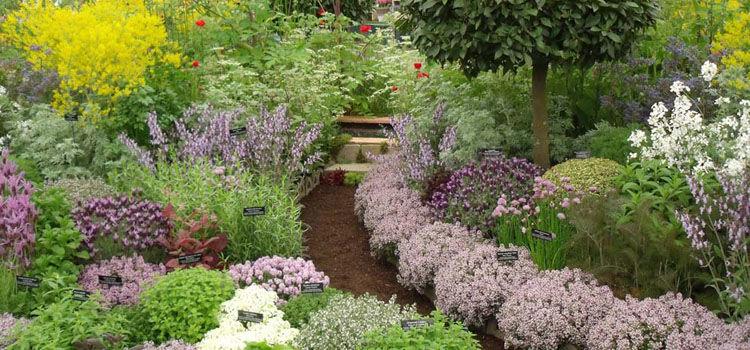herb gardens planning a new herb garden - part 1 NDWVRJD