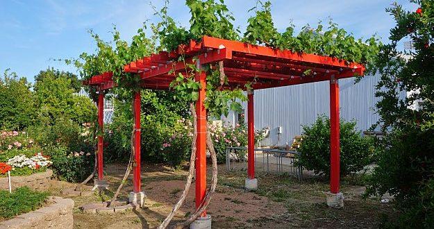 how to build a grape arbor - wooden grape arbor plan ideas MKRNQBX