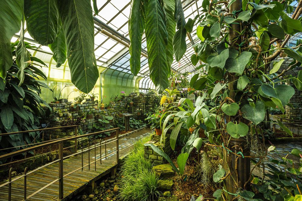 indoor gardens orchids and aroids greenhouse at the montreal botanical garden and biodome AYJZJCW