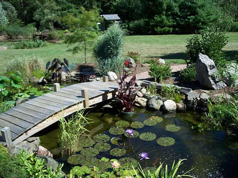 natural looking garden ponds UGQNRJJ