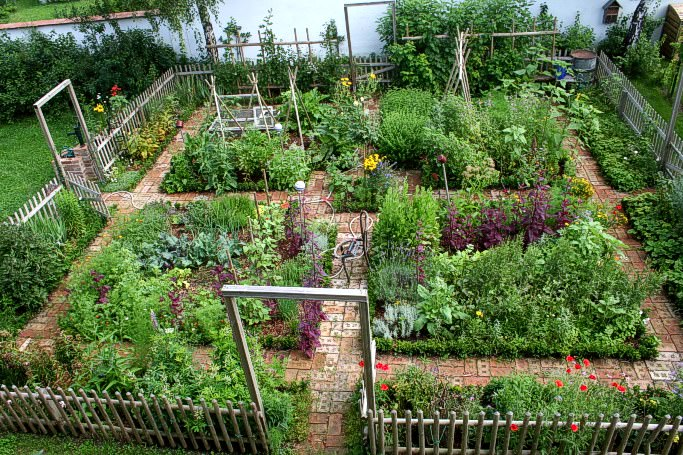 nice kitchen garden in austria - flowers-plants-planters YLAGDFV