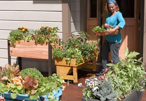 patio garden fresh food at your doorstep ESFPRLY