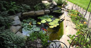 pond design and water features by aquareale DGMNNUW