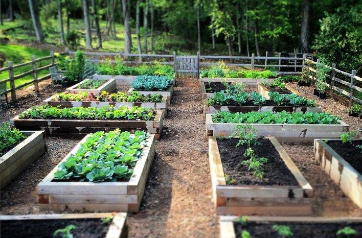 raised bed gardening BGKCFOJ