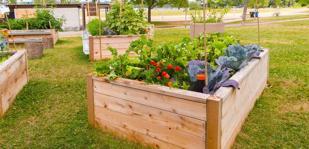 raised bed gardening ONGRMIA