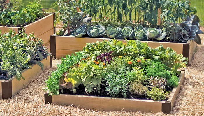 Use Raised Bed Gardening and Avoid Challenges