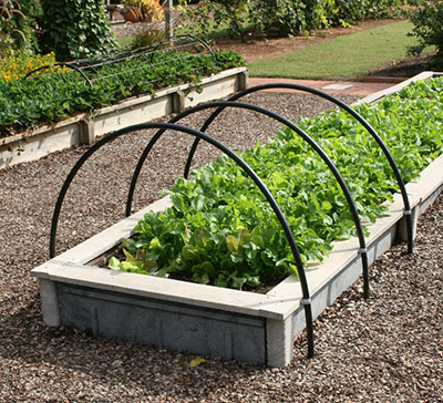 raised bed gardens raised beds with lettuce vegetable gardening ... JUMXQTK