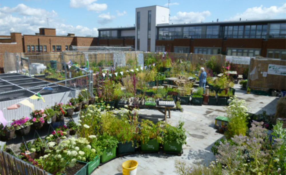 roof garden supermarket rooftop gardens: an exercise in community building? JVULKUJ