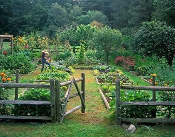 vegetable garden design with wooden fence UCTHGQD