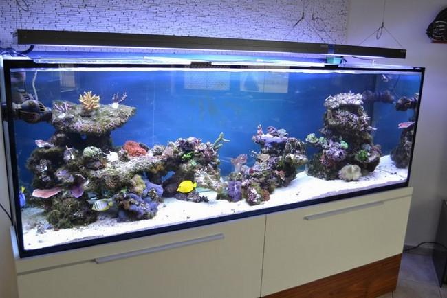 Set up a 300 gallon reef aquarium