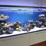 Maintenance Of 300 Gallon Aquarium